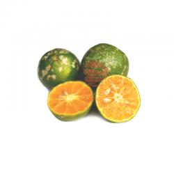 limon mandarina a domicilio en Quito